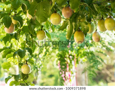 Passion fruit image