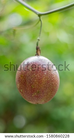 passion fruit, passion fruit on the tree