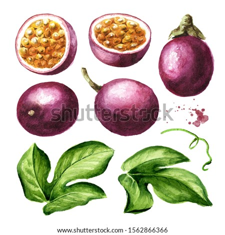 Passion fruit with leaf set. Watercolor hand drawn illustration  isolated on white background