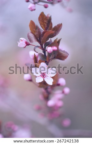 Pastel colored photo of cherry blossoms