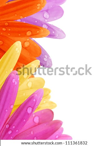 Pastel Gerbera daisy petal border with water drops in pink, purple, yellow and orange with copyspace.