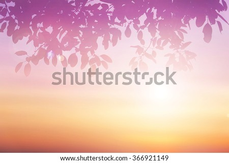Pastel gradient blurred sky,sunset background with silhouette leaves foreground on soft focus sunshine bright peaceful morning summer. Rays light clean beach outdoor with abstract leaf bokeh smooth. #366921149