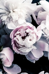 Pastel peony flowers as floral art background, botanical flatlay and luxury branding design