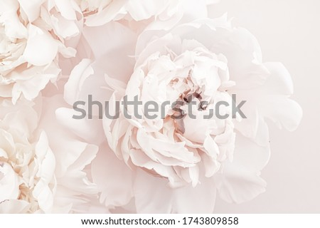 Photo of  Pastel peony flowers in bloom as floral art background, wedding decor and luxury branding design