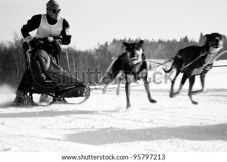 "PASTERKA , POLAND – FEBRUARY 04: First International Polish Championship Sled Dog PZSPZ ""Under Szczeliniec"" Sprint & Mid in Pasterka and Kar?ow, Poland February 04, 2012"