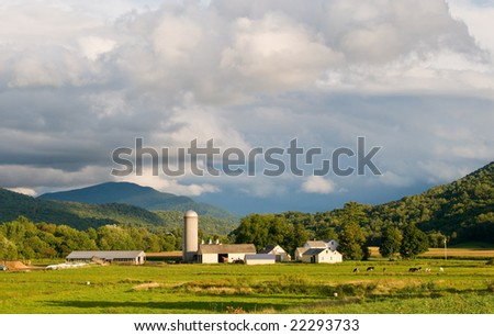 Pastoral dairy farm late afternoon, brightly sunlit under cloudy sky.  Horizontal format with room for copy.