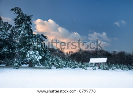 Pastoral scene, as twilight dawns, of an old barn, surrounded by snow covered Christmas trees in the Blue Ridge Mountains of Virginia