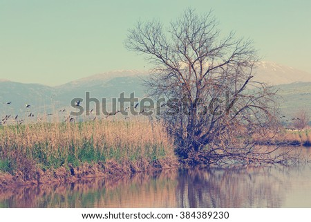 Pastoral spring landscape of Hula lake reserve and migrating cranes. Snow-covered top of the Hermon mountain in the background. North of Israel.  Vintage style photo