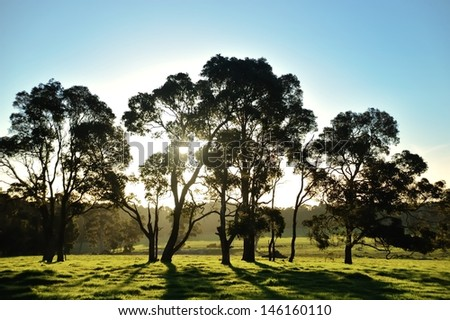 pasture and backlit trees in late afternoon sunlight