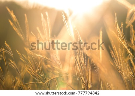 Pasture at sunset. It is lands in narrow sense are enclosed tracts of farmland grazed by domesticated livestock. In pasture land consists mainly of grasses legumes and fodder. It beautiful sun #777794842
