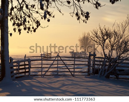 Pasture at winter sunset with tree and fence in front - stock photo