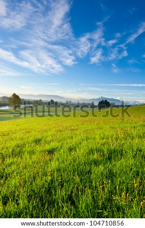 Pasture on the Background of Snow-capped Alps, Switzerland