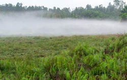 Pasture panoramic countryside. Morning view misty meadow. landscape valley mist nature trees in the fog field
