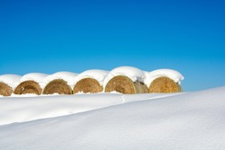 Pasture rolls with snow and the blue sky