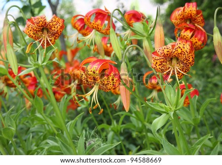patch of unique orange and yellow flowers
