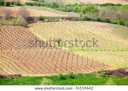 Patchwork landscape, cultivated fields and vineyards in spring