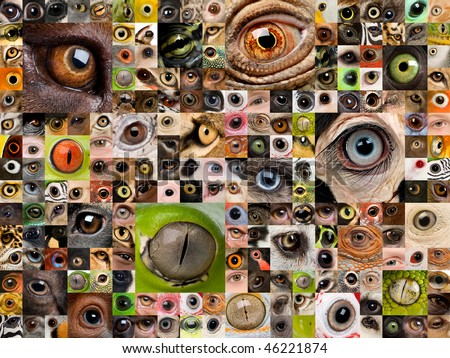 Patchwork of animals and human eyes