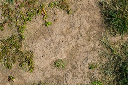 Patchy Grass Texture