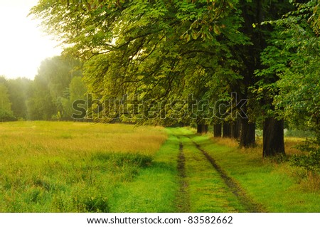 path - stock photo