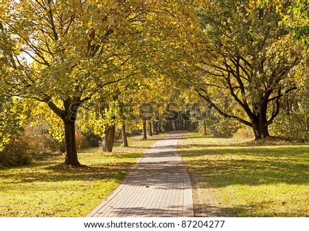 Path between the trees, beautiful Autumn scenery