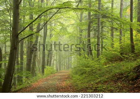 Path by early autumn forest