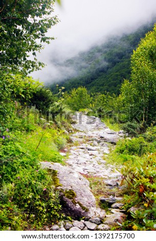 path captured this picture at trek to  valley of flowers Uttarakhand India