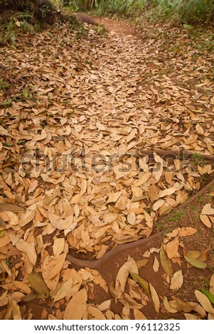 Path going through an autumn forest