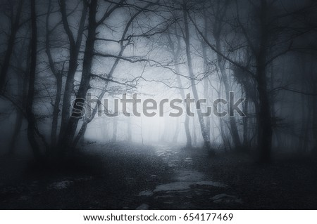 Stock Photo path in a dark and scary forest