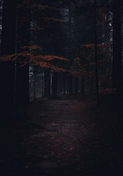 Path in a dark forest
