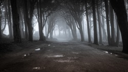 Path in a forest covered with mist. Arched tree branches