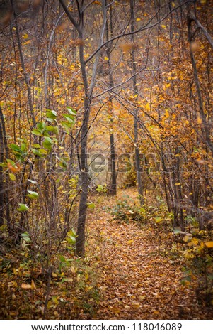 Path in a forest in the middle of autumn