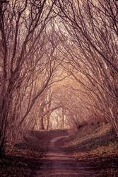 Path in a mysterious forest