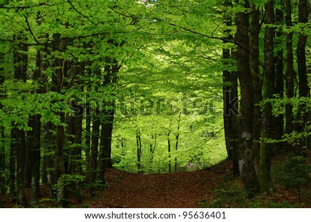 Path in a thick forest