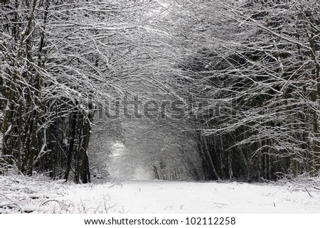 Path in a thick forest in winter- with trees covered in snow
