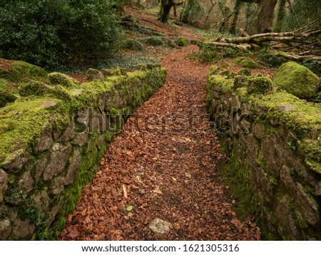 Path in autumn park, Brown leafs on the ground, Nobody, Barna Woods Galway city, Ireland. Stock fotó ©