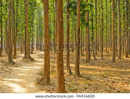path in between the forest