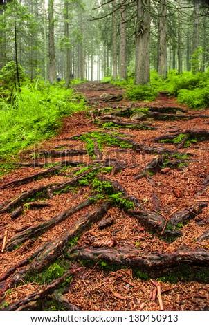 Path in dreamlike green forest, fairy landscape