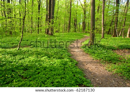Path in forest with vidi colors in spring