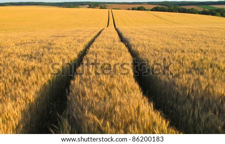 Path in golden fields
