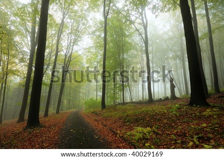 Path in green autumnal misty forest - stock photo