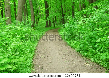 Path in green summer forest #132602981