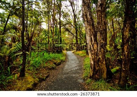 Path in jungle