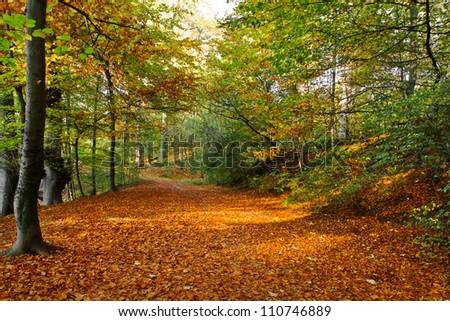 Path in the autumn park. Autumn Landscape. Park in Autumn. Forest  in Autumn. Dry leaves in the foreground.