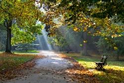 Path in the autumn park. Sunlight. Walking. Landscape.