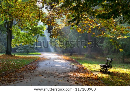 Path in the autumn park. Sunlight. Walking. Landscape.