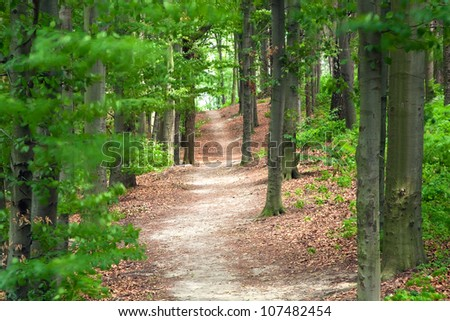 Path in the forest or park