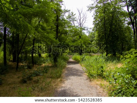 path in the forest, path in forest #1423528385