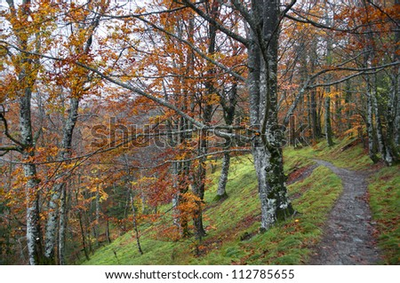 Path in the forest with autumn leaves