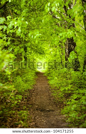 path in the green summer forest