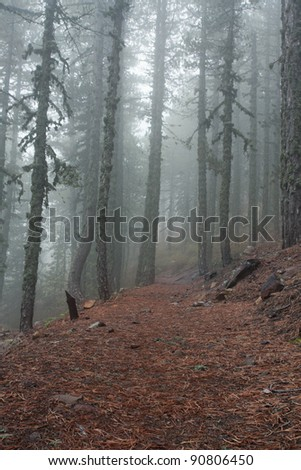 Path in the mist-covered mountain forest (Cyprus, Troodos)